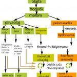 Az olajkészítés folyamatábrája. Ábra magyarul: igazioliva