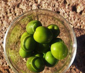 Miccio Nocellara MAGOZOTT zöld olajbogyó 150 g üveg